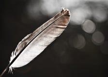 σαν φως φτερών Στοκ φωτογραφία με δικαίωμα ελεύθερης χρήσης