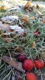 σαν όμορφα παραγωγής υδρονέφωσης πρωινού ωραία δέντρα ήλιων silhuettes Νοεμβρίου λάμποντας Στοκ Εικόνες