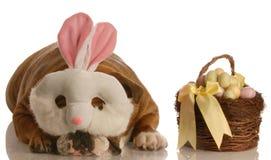 σαν bunny ντυμένο σκυλί Πάσχα Στοκ Εικόνες