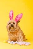 σαν bunny σκυλί Πάσχα Στοκ φωτογραφίες με δικαίωμα ελεύθερης χρήσης