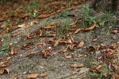 σαν floral καλά φύλλα κάστανων ανασκόπησης Στοκ φωτογραφία με δικαίωμα ελεύθερης χρήσης
