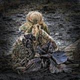 Σαπίζοντας λάχανο στο έδαφος κήπων Στοκ φωτογραφία με δικαίωμα ελεύθερης χρήσης