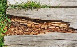 Σαπίζοντας ξύλο στην πορεία θαλασσίων περίπατων Στοκ Φωτογραφίες