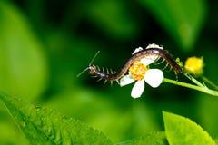Σαρανταποδαρούσες, ερπετά, έντομα στοκ εικόνες