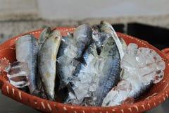 Σαρδέλλες με τον πάγο στο πιάτο στη Λισσαβώνα στοκ εικόνες