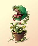 σαρκοφάγο φυτό Στοκ Εικόνες