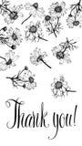 Σας ευχαριστούμε λαναρίζει με τα camomiles. Καλλιγραφία και han Στοκ Εικόνες