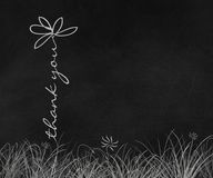 Σας ευχαριστούμε μαργαρίτα στον πίνακα κιμωλίας Στοκ Φωτογραφία