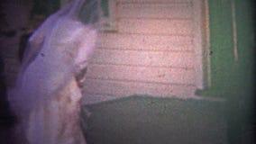 ΣΑΤΑΝΟΥΓΚΑ, ΗΠΑ - 1954: Πρόσφατα περίπατοι παντρεμένων ζευγαριών στο νέο σπίτι τους, σωλήνας καπνών ατόμων απόθεμα βίντεο