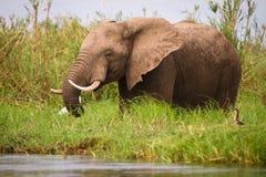 σαφάρι Ζιμπάπουε στοκ φωτογραφίες