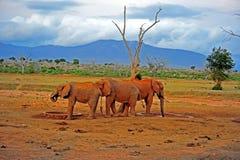 σαφάρι Κένυα Στοκ Εικόνες