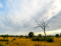 Σαφάρι της Αφρικής Στοκ φωτογραφίες με δικαίωμα ελεύθερης χρήσης