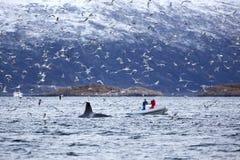 Σαφάρι φαλαινών στη βάρκα πλευρών στο αρκτικό περιβάλλον Στοκ εικόνες με δικαίωμα ελεύθερης χρήσης