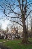 Σαφές βράδυ άνοιξη στο πάρκο του μουσείου Kolomenskoye, Μόσχα κτημάτων Στοκ Φωτογραφία