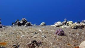 Σαφές κοράλλι του Σάλεμ Στοκ φωτογραφίες με δικαίωμα ελεύθερης χρήσης