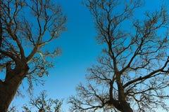 Σαφές υπόβαθρο ουρανού θόλων δέντρων στοκ εικόνες με δικαίωμα ελεύθερης χρήσης