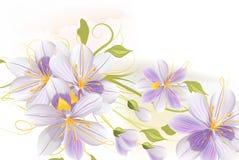 Σαφές floral υπόβαθρο με τα λουλούδια υάκινθων Στοκ εικόνα με δικαίωμα ελεύθερης χρήσης