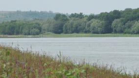 Σαφής ακτή ποταμών με τη χλόη απόθεμα βίντεο