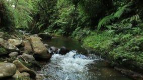 Σαφής καφετής του χρώματος, του τροπικού δασικού ρεύματος ή του ποταμού με την πολύβλαστη πράσινη βλάστηση και τα μεγάλα bolders φιλμ μικρού μήκους