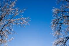 Σαφής μπλε ουρανός μεταξύ των παγωμένων δέντρων Στοκ Εικόνες