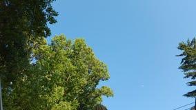 Σαφής μπλε ουρανός Στοκ φωτογραφίες με δικαίωμα ελεύθερης χρήσης