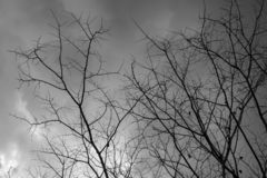 Σαφής ουρανός με την άσπρη άποψη σύννεφων μέσω του ξηρού δέντρου στοκ φωτογραφία με δικαίωμα ελεύθερης χρήσης