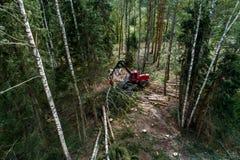 Σαφής-τέμνουσα θεριστική μηχανή σε ένα βόρειο δάσος στοκ εικόνα