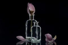 Σαφή μπουκάλια κρυστάλλου με τις τουλίπες Στοκ Εικόνες