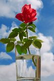 σαφή τριαντάφυλλα γυαλι& Στοκ Φωτογραφίες