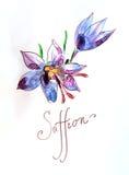 Σαφράνι Watercolor Στοκ Φωτογραφίες