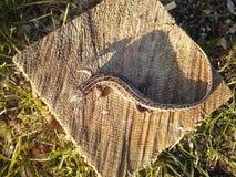 Σαύρα σε μια ξύλινη επιφάνεια στοκ φωτογραφίες