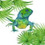 Σαύρα Iguana απομονωμένος η διακοσμητική εικόνα απεικόνισης πετάγματος ραμφών το κομμάτι εγγράφου της καταπίνει το watercolor Στοκ Εικόνα