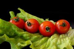 Σαλάτα και ντομάτες στο μαύρο υπόβαθρο Στοκ εικόνα με δικαίωμα ελεύθερης χρήσης
