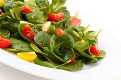 Σαλάτα με το arugula και το σπανάκι Στοκ Εικόνες