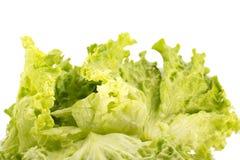 Σαλάτα που απομονώνεται φρέσκια στο λευκό Στοκ εικόνα με δικαίωμα ελεύθερης χρήσης