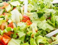 σαλάτα που βλασταίνεται στενή επάνω στο λαχανικό Στοκ Φωτογραφία