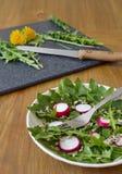 Σαλάτα που γίνεται από τα φύλλα της πικραλίδας, των σπόρων ηλίανθων και του ραδικιού Στοκ εικόνα με δικαίωμα ελεύθερης χρήσης