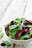 Σαλάτα Romaine, arugula, σπανάκι, mizuna, chard, δρύινη σαλάτα μιγμάτων Στοκ Εικόνες
