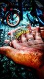 Σαλβαδόρ στοκ εικόνες με δικαίωμα ελεύθερης χρήσης