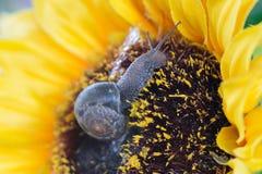Σαλιγκάρια κήπων Στοκ φωτογραφία με δικαίωμα ελεύθερης χρήσης