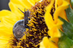 Σαλιγκάρια κήπων Στοκ εικόνες με δικαίωμα ελεύθερης χρήσης