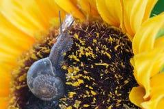 Σαλιγκάρια κήπων Στοκ φωτογραφίες με δικαίωμα ελεύθερης χρήσης