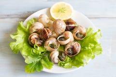 Σαλιγκάρια με το σκόρδο στην έννοια τροφίμων πιάτων Στοκ φωτογραφία με δικαίωμα ελεύθερης χρήσης