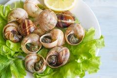 Σαλιγκάρια με το σκόρδο στην έννοια τροφίμων πιάτων Στοκ Εικόνες