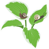 Σαλιγκάρια στα φύλλα Στοκ Εικόνα