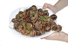 Σαλιγκάρια στο πιάτο στοκ φωτογραφίες με δικαίωμα ελεύθερης χρήσης