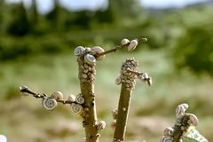 Σαλιγκάρια Στοκ εικόνες με δικαίωμα ελεύθερης χρήσης