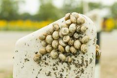 Σαλιγκάρια Στοκ φωτογραφίες με δικαίωμα ελεύθερης χρήσης
