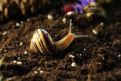 Σαλιγκάρια 5 Στοκ Φωτογραφίες