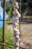 Σαλιγκάρια Στοκ φωτογραφία με δικαίωμα ελεύθερης χρήσης